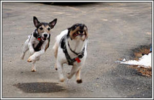 Fast_dogs