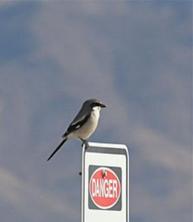 Warning_sign_bird