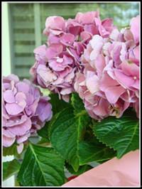 Mauriceville_flower_2